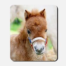 Orphaned Foal - Joy Mousepad