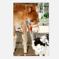 Orphaned Foal - Joy Postcards (Package of 8)