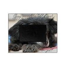 Grey Muzzles, Gold Hearts Picture Frame