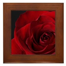 2011vDayRose_7_16x20 Framed Tile