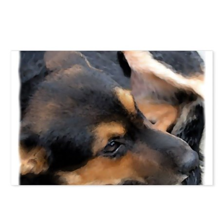 Curled Up Cattle Dog Postcards (Package of 8)
