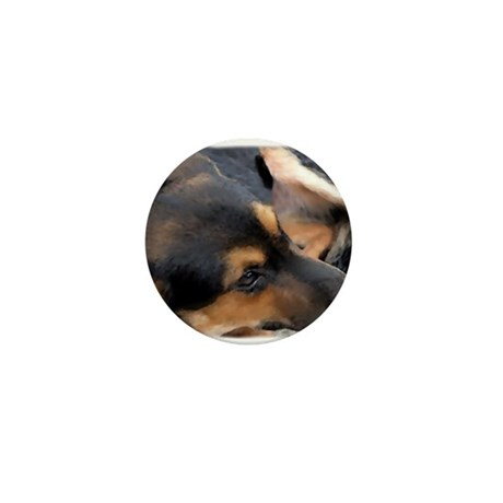 Curled Up Cattle Dog Mini Button (100 pack)