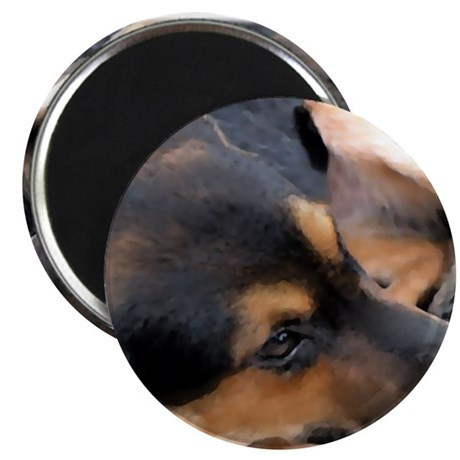 """Curled Up Cattle Dog 2.25"""" Magnet (100 pack)"""