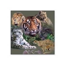 "ip001528catsbig cats3333 Square Sticker 3"" x 3"""