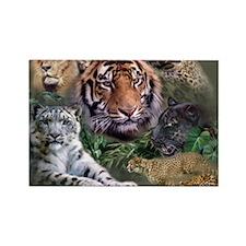 ip001528catsbig cats3333 Rectangle Magnet