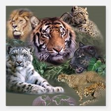 """ip001528catsbig cats3333 Square Car Magnet 3"""" x 3"""""""