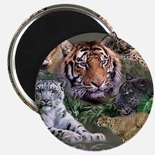 ip001528catsbig cats3333 Magnet