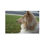 Collie Profile Rectangle Magnet (10 pack)