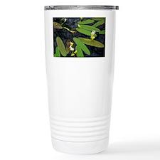 DSC_0366edit Travel Mug