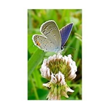 Blue Butterfly Itouch2, Itouch Decal