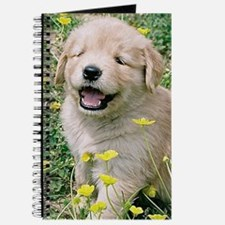 Golden Retriever Puppy Itouch2 Itouch4 Ipo Journal