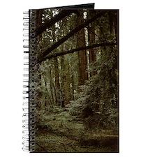 Muir Woods 2-Notecard Journal