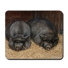 Pot Bellied Pigs Lisbon Zoo_July_14by10  Mousepad