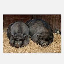 Pot Bellied Pigs Lisbon Z Postcards (Package of 8)