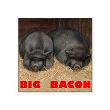 """Pot_Bellied_Pigs_Big_Bacon_ Square Sticker 3"""" x 3"""""""