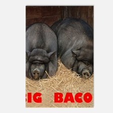 Pot_Bellied_Pigs_Big_Baco Postcards (Package of 8)