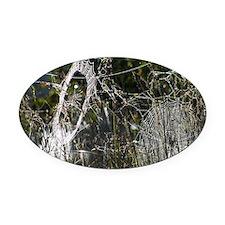 Spider webs 9R030D-012 Oval Car Magnet