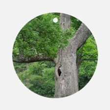 Hollow Oak Tree on Western Campus Round Ornament