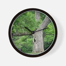 Hollow Oak Tree on Western Campus Wall Clock