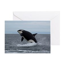 IMG_2447 - Copy Greeting Card