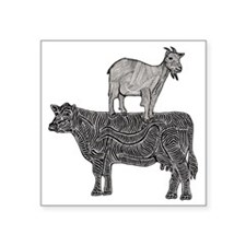 "Goat on cow-2 Square Sticker 3"" x 3"""