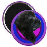 Newfoundland Profile Magnet