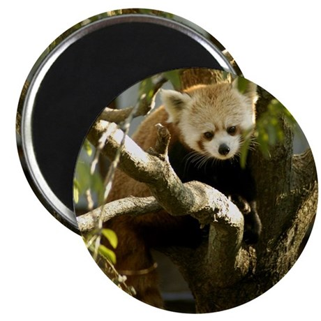 Red Panda 2 Magnet