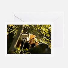 Red Panda 1 Greeting Cards (Pk of 10)
