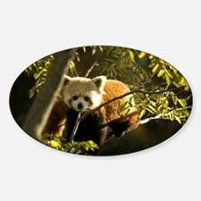 Red Panda 1 Oval Decal