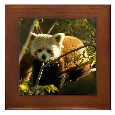 Red Panda 1 Framed Tile