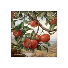 "Apples_TILE Square Sticker 3"" x 3"""