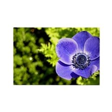 Blue Anemone Rectangle Magnet
