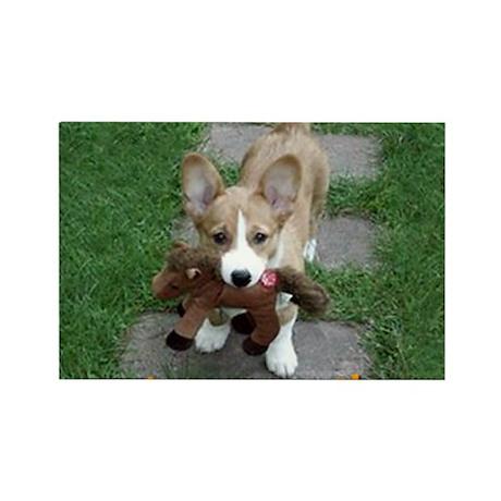 corgi_puppy_and_friend Rectangle Magnet