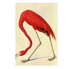 audubon 4 Postcards (Package of 8)