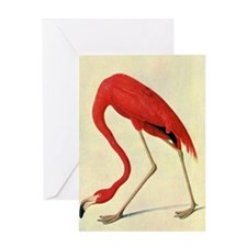 audubon 4 Greeting Card