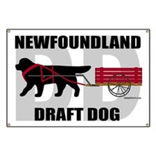 DraftDogTitle Banner