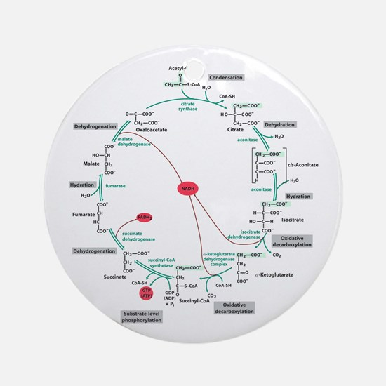 Kreb's Cycle Ornament (Round)