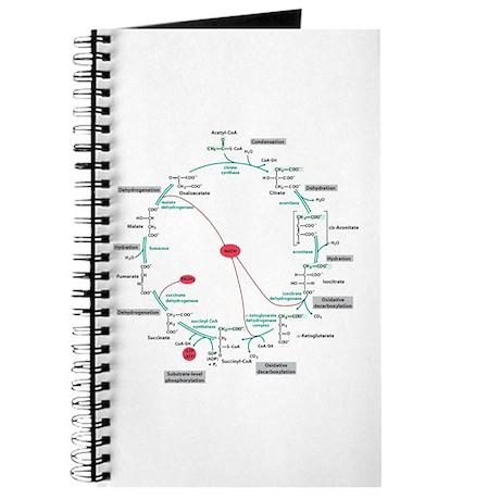 Kreb's Cycle Journal