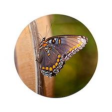"""10-09-18_Tarara_Winery_DSC_4436 3.5"""" Button"""