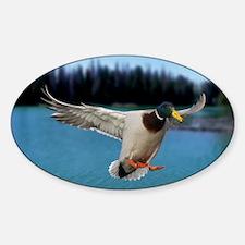 Mallard Duck Sticker (Oval)
