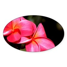 Plumeria Oval Decal