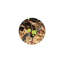 IMG_0304 Cropped - Copy Mini Button