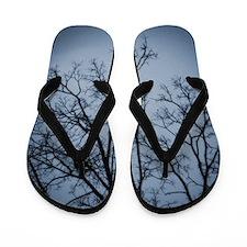 RM2011JP_2229 Flip Flops