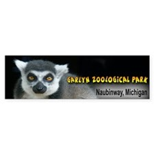 Ring-tailed Lemur Bumper Bumper Sticker