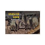 Ring-tailed Lemur Rectangle Magnet (10 pack)