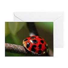 Ladybug 201 04-30-10 with LR Edits a Greeting Card