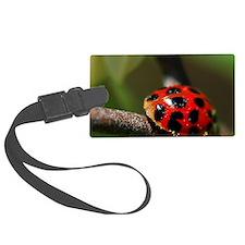 Ladybug 201 04-30-10 with LR Edi Luggage Tag