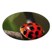 Ladybug 201 04-30-10 with LR Edits  Decal