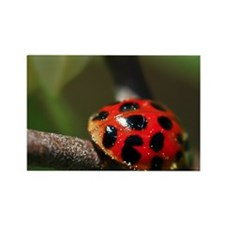 Ladybug 201 04-30-10 with LR Edit Rectangle Magnet