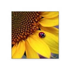 "Ladybug on Sunflower1 Square Sticker 3"" x 3"""
